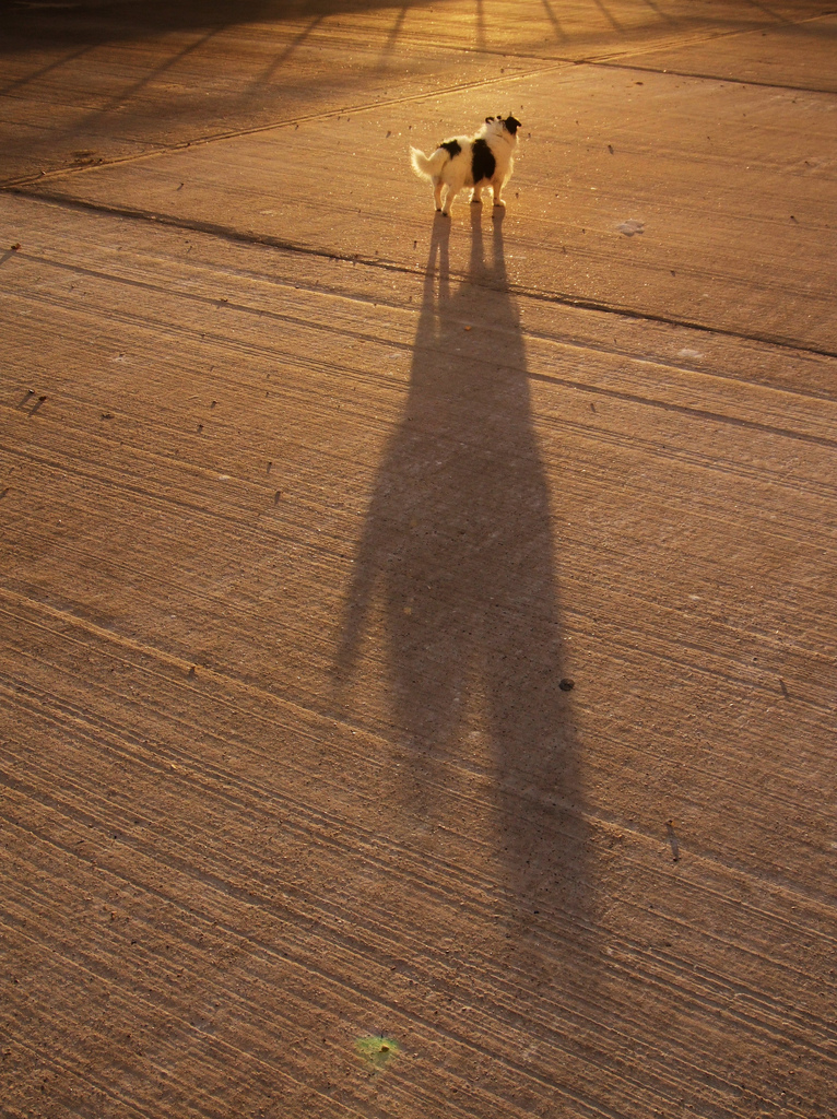 Big Shadow