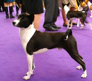 What dog breed should I choose?