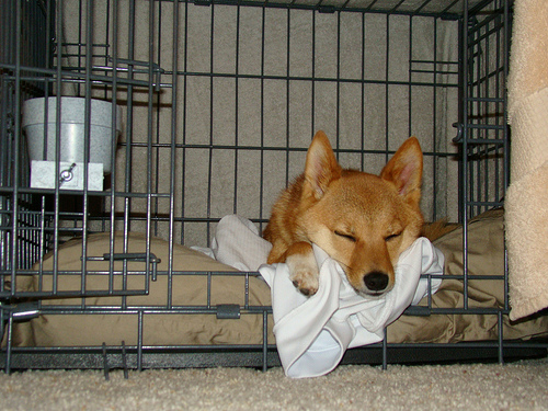 How to crate train your dog so he sleeps like this.