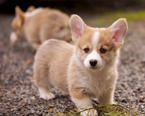What dog should I get? Maybe a puppy!