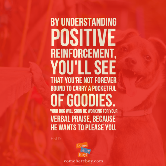 Dog Training Quotes Patricia Mcconnell