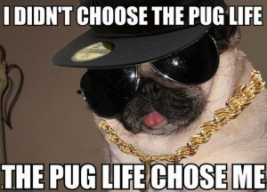 Pug Life, yo