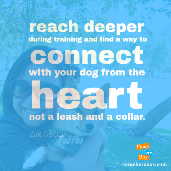 reach deeper during training and find a way to connect with your dog from the heart