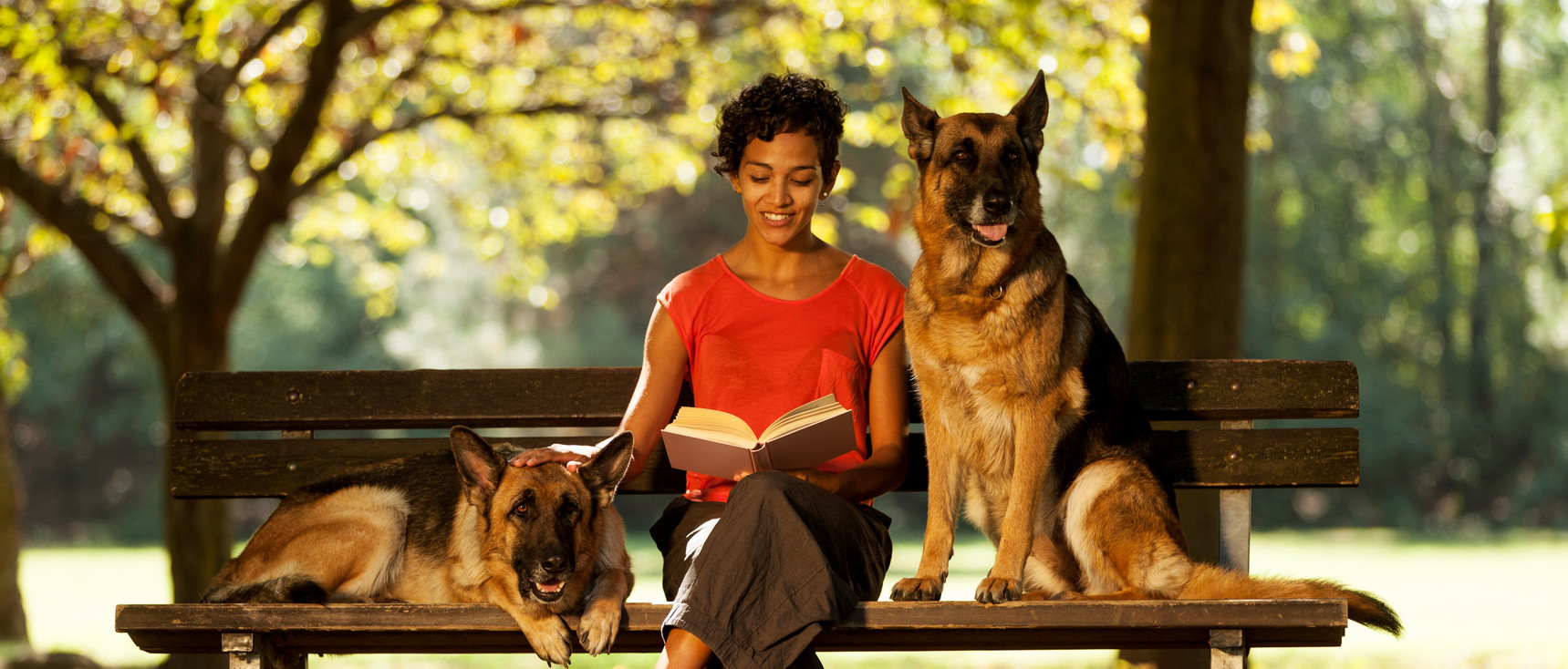 Train Your German Shepherd to be a well-behaved service or therapy dog at home