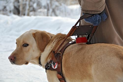service dog photo