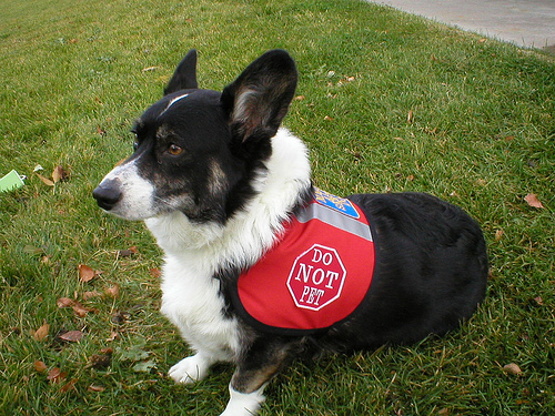 mobility dog photo